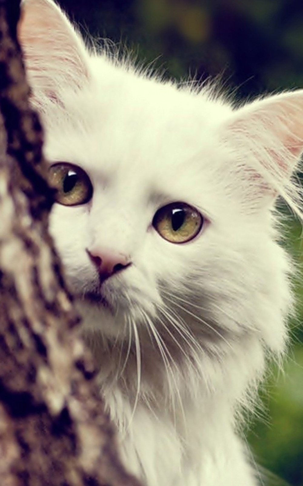 white cat mobile wallpaper - mobiles wall