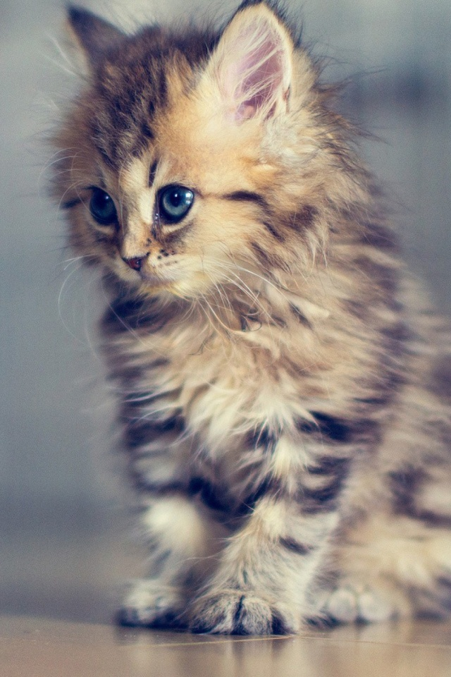Baby Cat Mobile Wallpaper Mobiles Wall
