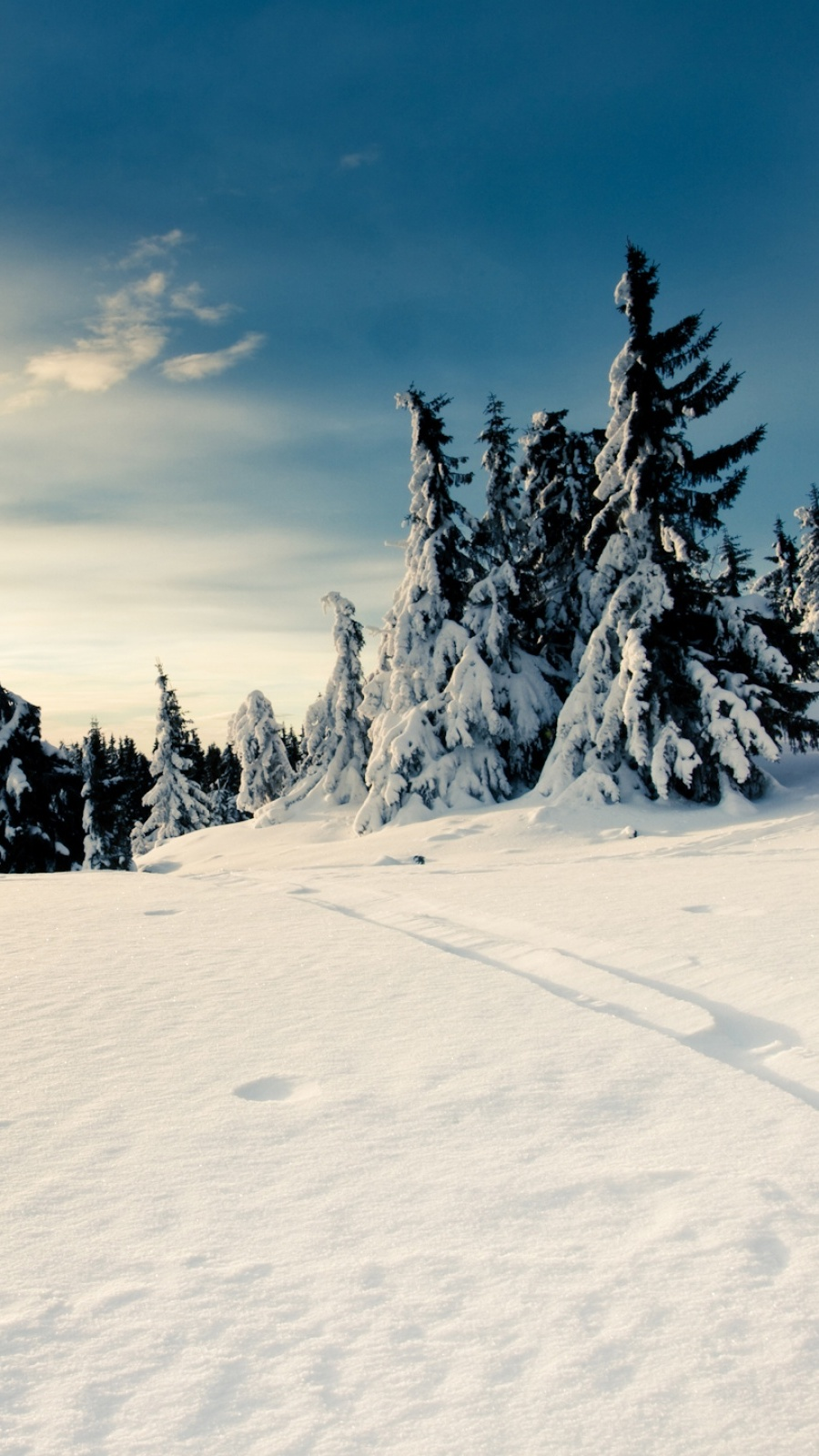 Winter Snow Nature Photography Beautiful Forests Magnificent Trees