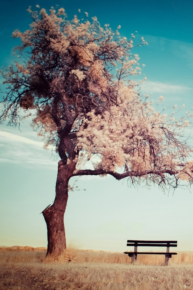 Nature Cherry Blossoms Trees Mobile Wallpaper Mobiles Wall