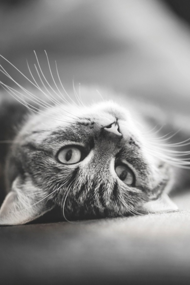 Black And White Cat Mobile Wallpaper Mobiles Wall