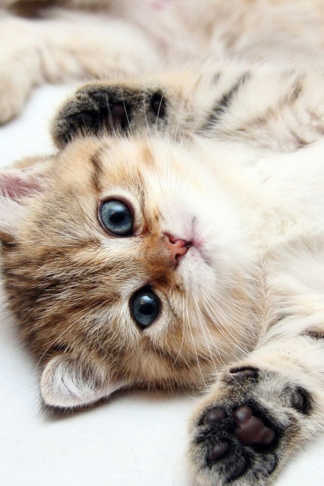 Kitten wallpaper phone pets wallpapers wallpaper jpg really cute cats and kittens s mobile now thecheapjerseys Choice Image