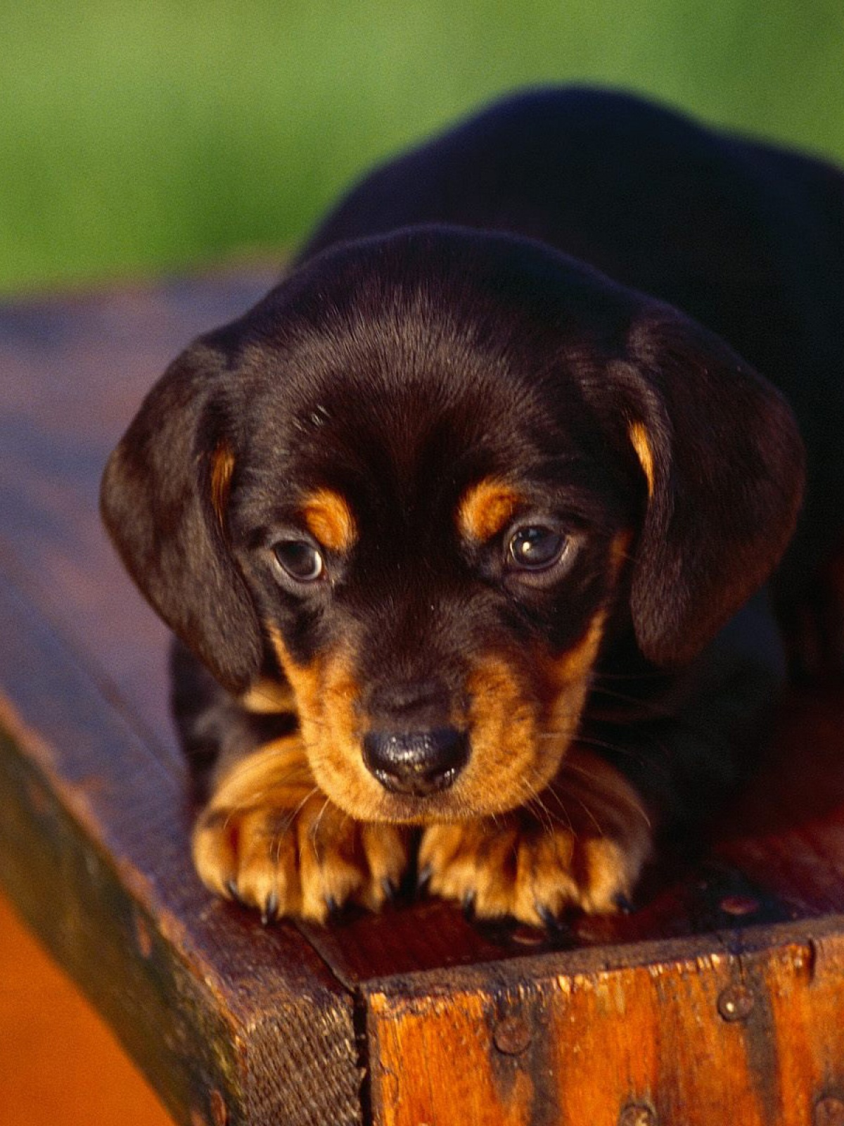 61 best Dogs Wallpapers images on Pinterest   Wallpapers, Animals .