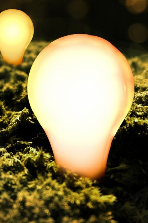 Light Bulbs Moss Mobile Wallpaper