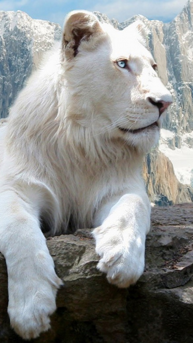 Amazing Lion Wallpaper Hd Animals And Birds Wallpapers For