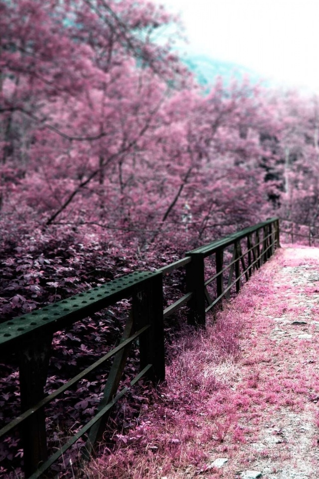 Japan Bridges Cherry Blossoms Mobile Wallpaper Mobiles Wall