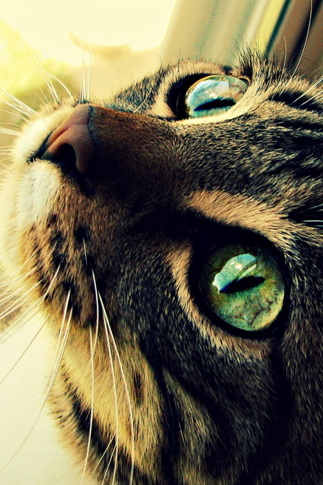 The Cat Eyes Mobile Wallpaper Mobiles Wall