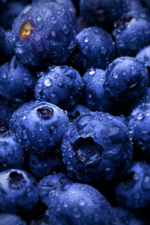 Blue Berries Mobile Wallpaper