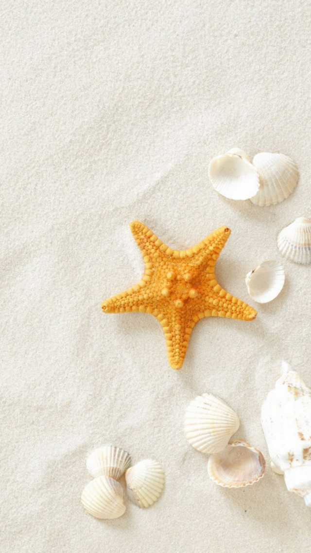 White Sand Starfish Clam Shells Mobile Wallpaper Mobiles Wall