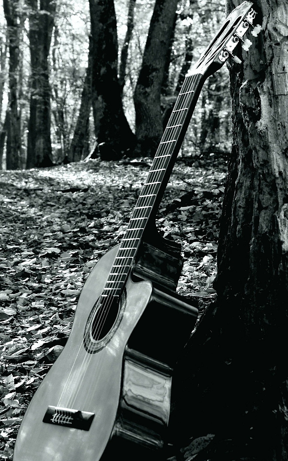Forrest Guitar Mobile Wallpaper Mobiles Wall