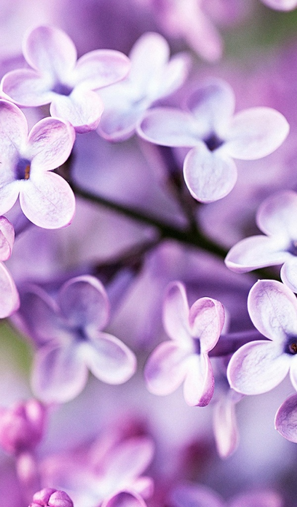 Spring Purple Flowers Mobile Wallpaper Mobiles Wall