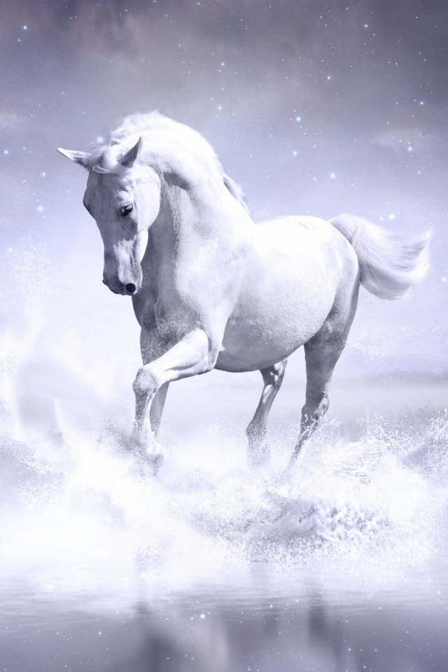 White Horse Mobile Wallpaper Mobiles Wall