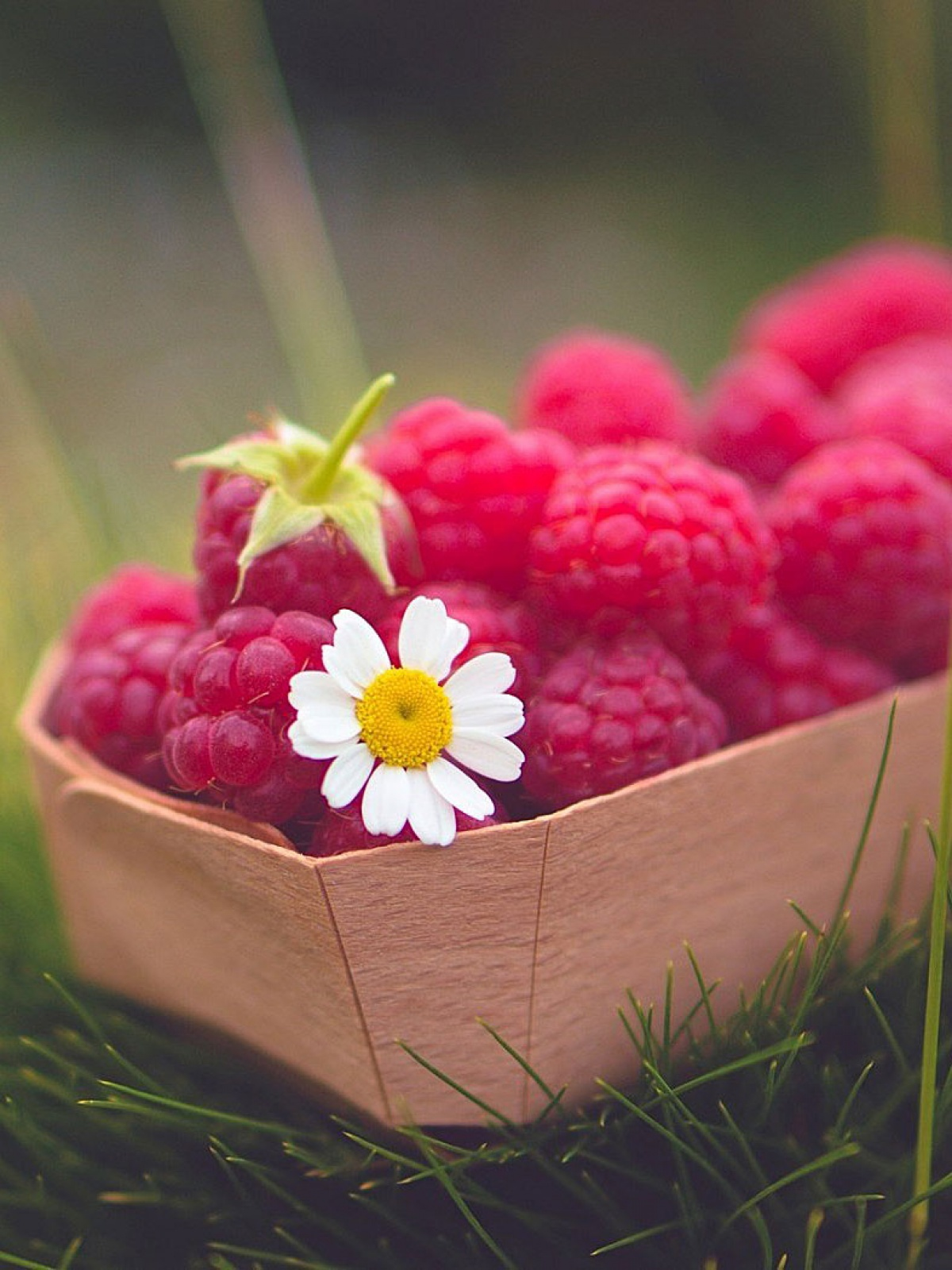 food raspberries berry daisy mobile wallpaper - mobiles wall