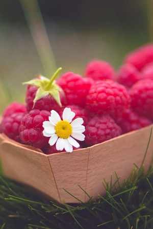 Food raspberries berry daisy Mobile Wallpaper