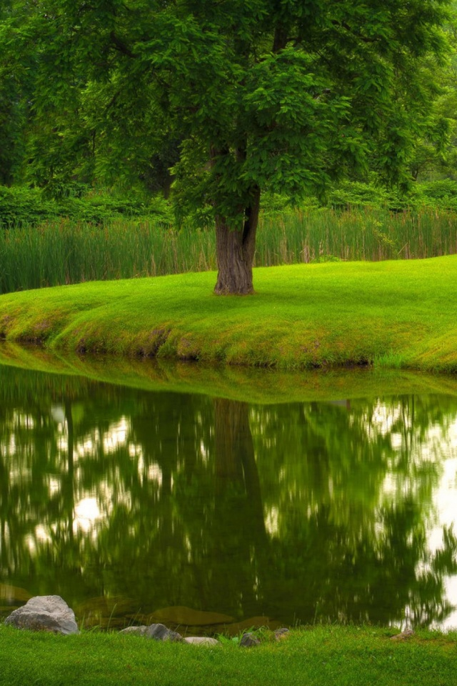 Green Lawn Nature Mobile Wallpaper - Mobiles Wall