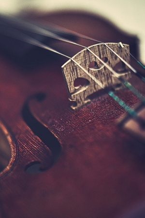 Macro violin Mobile Wallpaper