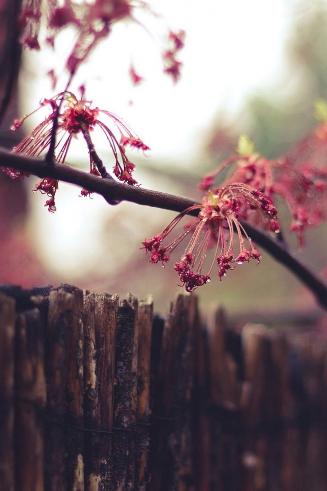 Nature fence flowers mobile wallpaper mobiles wall download now thecheapjerseys Gallery