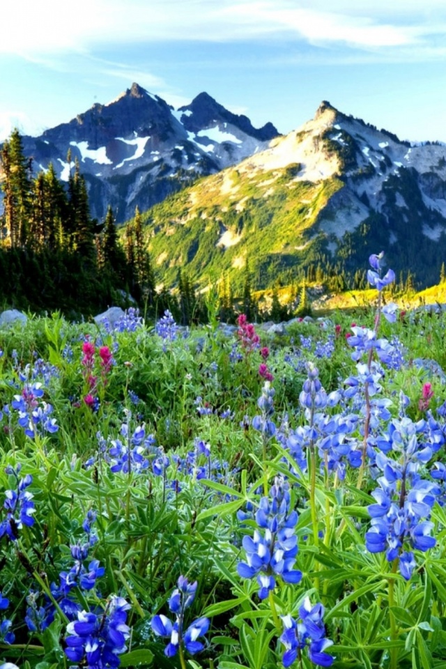 Mountains Flowers Mobile Wallpaper. 1716 views. Preview · 1553 views