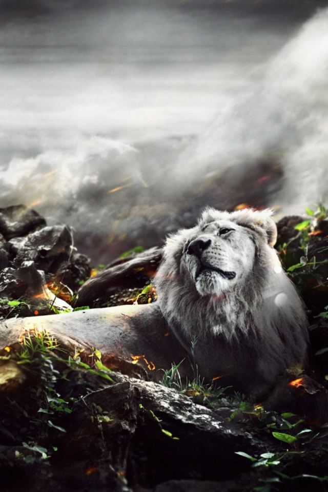Jungle Lion Mobile Wallpaper Mobiles Wall