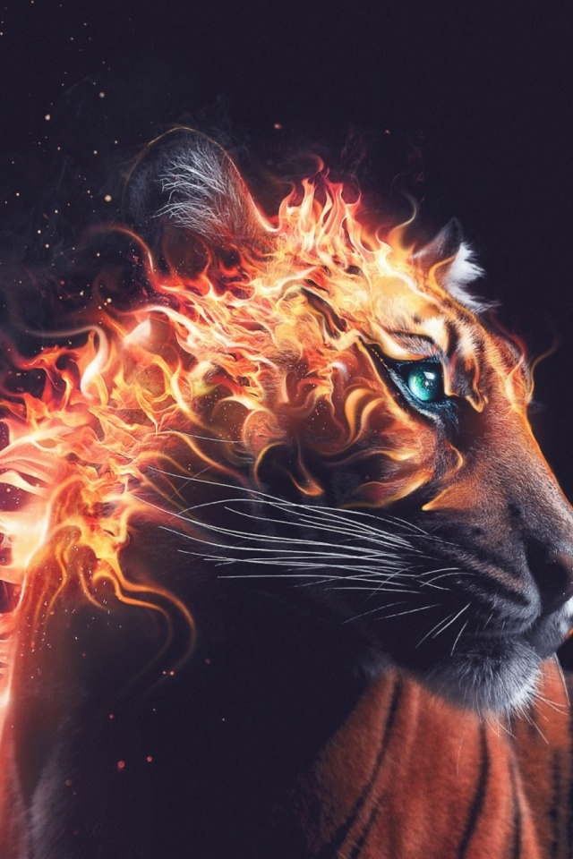 Tiger Fire Mobile Wallpaper Mobiles Wall
