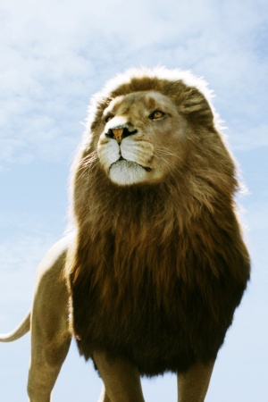 Aslan in Narnia Dawn Treader Mobile Wallpaper