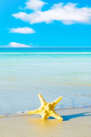 Starfish On The Beach Mobile Wallpaper
