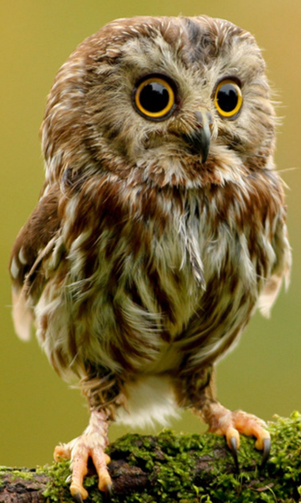 Cute owl mobile wallpaper mobiles wall voltagebd Choice Image