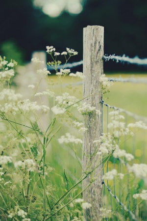 Fence Mobile Wallpaper