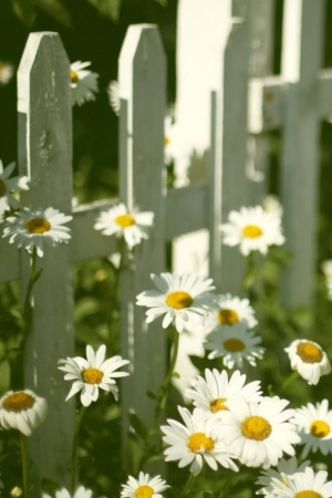 Flowers Near Fence Mobile Wallpaper