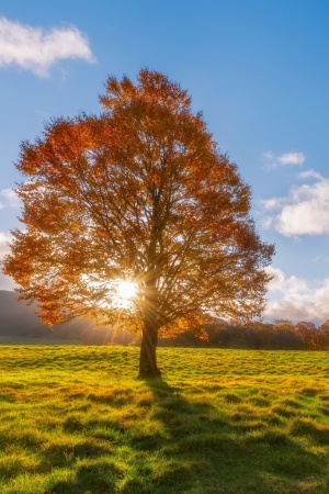 Sunlight Through Tree Mobile Wallpaper