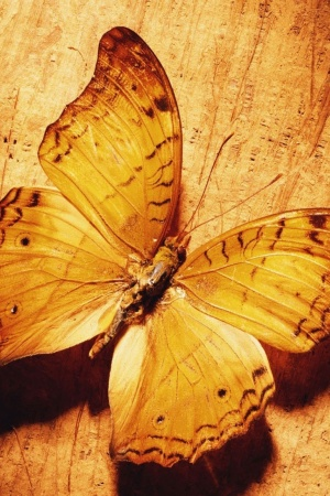 Beautiful Butterfly On Wood Mobile Wallpaper