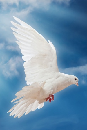 dove peace sky pigeon white Mobile Wallpaper