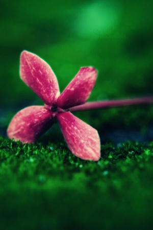 Flower on Grass Mobile Wallpaper