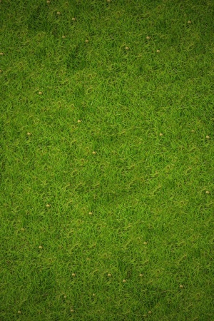 Grass Mobile Wallpaper