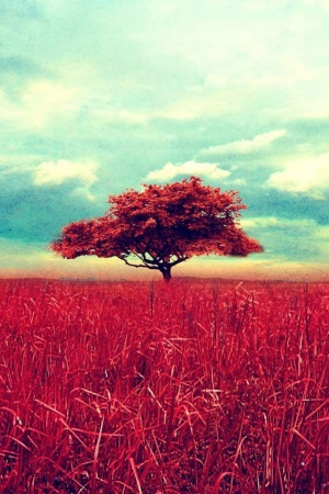Lone Red Tree Mobile Wallpaper