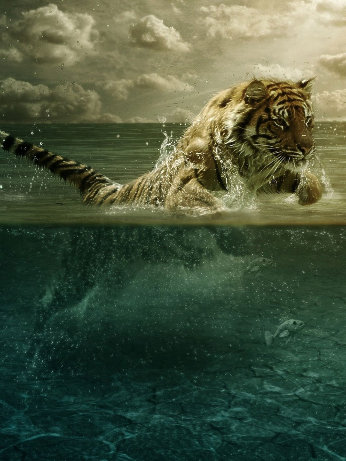 Best Wallpaper Mobile Animal - 1200-Tiger-Playing-in-Water-l  Photograph_297235.jpg