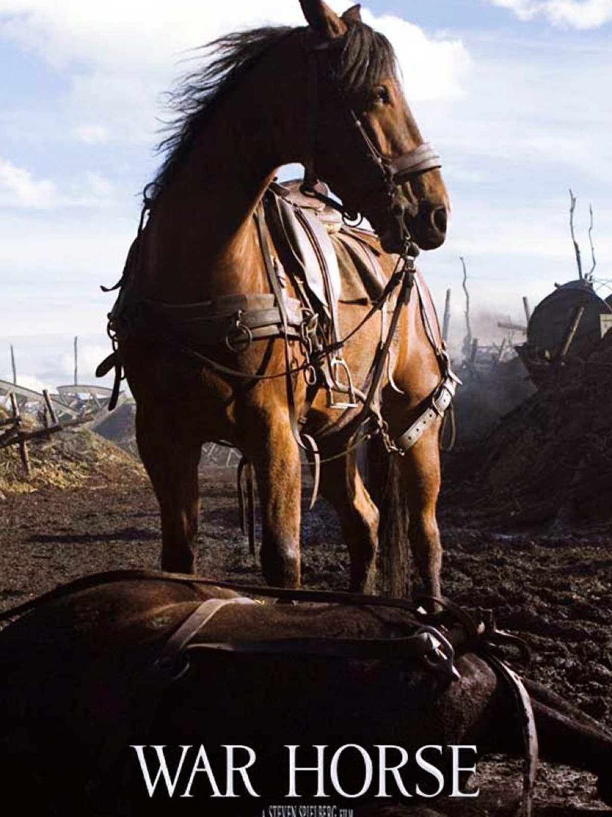 War Horse Mobile Wallpaper Mobiles Wall