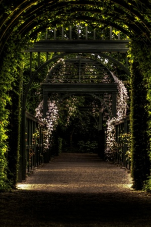 Garden Path Way Park Mobile Wallpaper