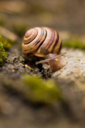 Nature Animal Snail Macro Mobile Wallpaper