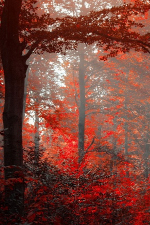 Red Forest Mobile Wallpaper