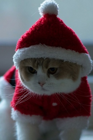 Santa Claus Cat Mobile Wallpaper