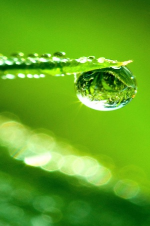 Water Drop Reflection Mobile Wallpaper